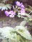 130521_1831051.jpg