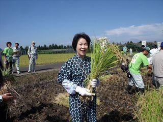 2011稲刈り.jpg