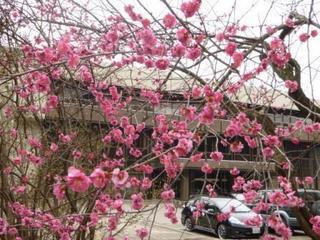 ○県議会前の花(圧縮)P1050968.jpg