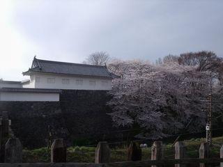 大手門の桜 001.jpg