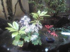 庭に.jpg