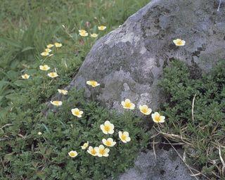 月山の花.JPG
